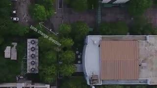 استفاده از پهپادهای خودران برای دور کردن پرندگان از فرودگاه