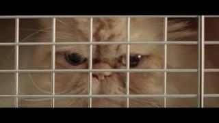 تبلیغات خنده دار خودرو با حضور گربه ها