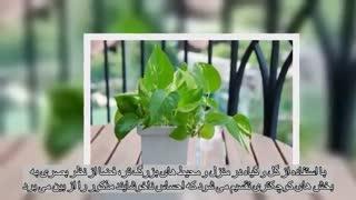 دلایل استفاده از گل و گیاه در دکوراسیون خانه