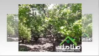 خرید و فروش باغ و باغچه در خوشنام ملارد کد1381