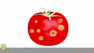 آیا میوهها و سبزیجات لکهدار سالمند؟ ویدو ال