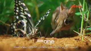 """مستند """"امپراطوری پنهان"""" ساخته bbc از ناشناخته های کوچک دنیا"""