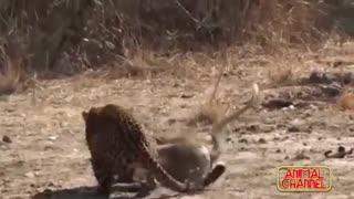 هنر نمایی بهترین شکارچی های حیات وحش