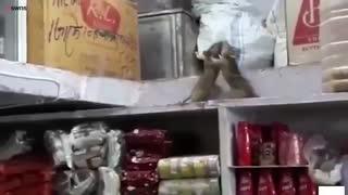 دعوای دو موش از نزدیک