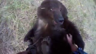 دوستی با خرس گریزلی