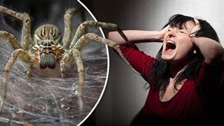 چرا از عنکبوت میترسیم ؟