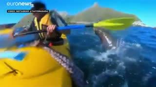 فک بازیگوشی که به صورت قایقران هشتپا پرت کرد