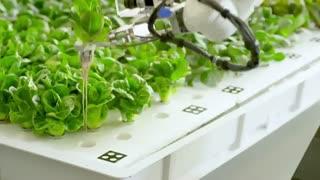 افتتاح مزرعه رباتیک، کشاورزی بدون نیاز به خاک