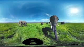 تور مجازی همراه با فیل ها