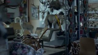 دانلود رایگان فیلم کوپال