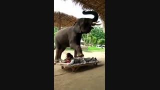 ماساژ دادن بوسیله فیل!